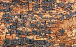 Woody background Stock Images