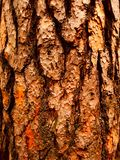 Woody bark royalty free stock images