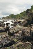 Woody Bay Royalty Free Stock Photo