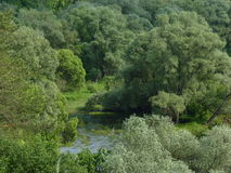 Woody coast of Protva river. Summer landscape with woody coast of Protva river nearby Vereya town, Russia stock images