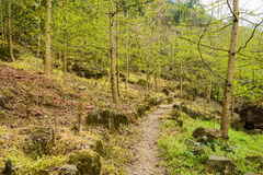 Woody footpath on mountainside in spring Stock Photo