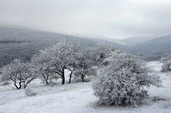 Woody hills covered with snow. Woody hills in Eastern Crimea covered with snow stock image