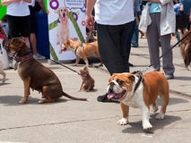 Woofstock dog festival in Toronto Stock Photos