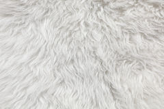 Wool background. Stock Photography