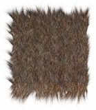 Wool Bear. The texture of fur bear - close-up Royalty Free Stock Images
