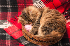 Wool blanket and a cat Stock Images