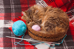 Wool blanket and a cat. Wool blanket, knitting needles, balls and cat in a basket Stock Image