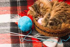 Wool blanket  and cat. Wool blanket, knitting needles, balls and cat in a basket Royalty Free Stock Images