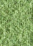 Wool fabric green stock photography