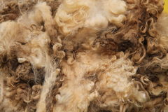 Wool Fleece. A Recently Sheared Wool Fleece from a Sheep stock photography