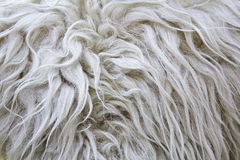 Wool Skin Stock Photography