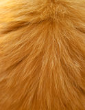 Wool of a red cat Stock Photography