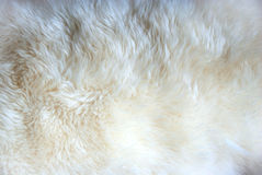Wool Rug texture Stock Image