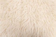 Wool sheep closeup Royalty Free Stock Photography