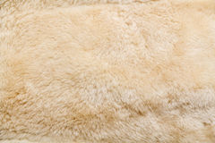 Free Wool Sheep Closeup Stock Image - 34832941