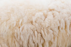 Wool sheep closeup Stock Photo
