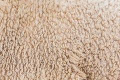 Wool sheep closeup Royalty Free Stock Image