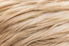 Wool sheep closeup Stock Photo