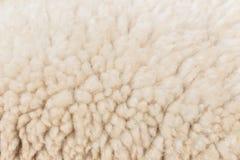 Wool sheep closeup Royalty Free Stock Images