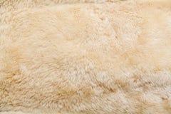 Wool sheep closeup Stock Image