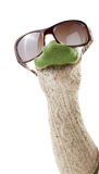 Wool sock puppet with sunglasses. Isolated on white background Royalty Free Stock Photos