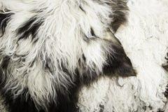 Wool Vests skin Royalty Free Stock Photos