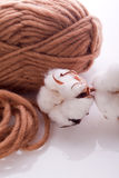 Wool with white cotton plant Stock Image