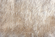 Woolen. Stocking fabric, background from fabric Stock Images