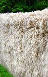 Woolen blankets Royalty Free Stock Photos