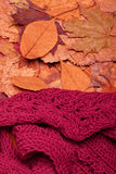 Woolen scarf. Autumn fall leaves and red woolen scarf Stock Image