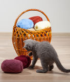 Woolen yarn and little kitten in a braided basket Stock Photos