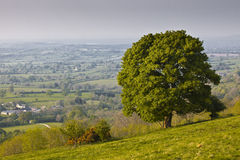 Woolland Hill, Dorset, England, UK. Royalty Free Stock Photography