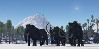 Woolly Mammath. A herd of Woolly Mammoths migrate to a warmer climate in the Pleistocene Age Stock Photo
