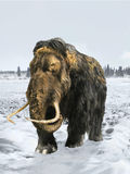 Woolly Mammoth. Ice age fauna in natural conditions Stock Image
