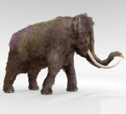 Woolly Mammoth Stock Photography