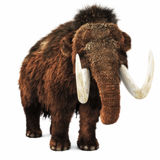 Woolly Mammoth on an isolated white background. Royalty Free Stock Image