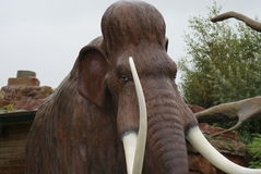 Woolly Mammoth - Mammuthus primigenius. A Woolly Mammoth - Mammuthus primigenius Stock Images