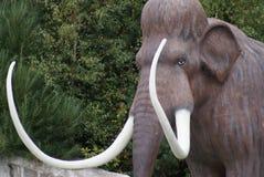 Woolly Mammoth - Mammuthus primigenius Stock Image