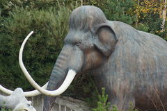 Woolly Mammoth - Mammuthus primigenius. The Elephant Ancestor - Woolly Mammoth - Mammuthus primigenius Stock Images