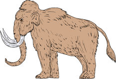 Woolly Mammoth Side Drawing Royalty Free Stock Images