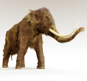 Woolly Mammoth On White Background Stock Image