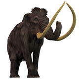 Woolly Mammoth on White. Woolly Mammoths are extinct herbivorous mammals that lived from the Pleistocene to the Holocene Periods Royalty Free Stock Photo