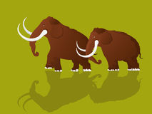 Woolly mammoths. Cartoon style drawing of two mammoths Stock Photo