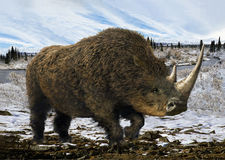 Woolly Rhinoceros Stock Photo