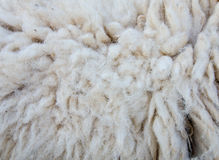 woolly sheep fleece for background Stock Photos