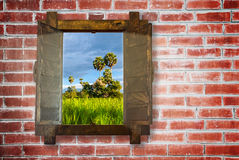 Woonden window on red brick wall with rice field view Royalty Free Stock Photos