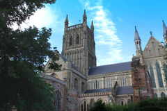Worcester domkyrkatorn och södra tvärskepp mellan buskar Royaltyfria Bilder