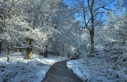 Worcwestershire skogsmark i vinter Arkivbild