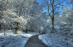 Worcwestershire woodland in winter Stock Photography