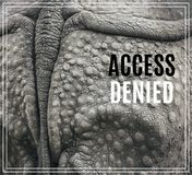Word Access Denied. Closeup of the strong armor of a rhinoceros. Royalty Free Stock Image
